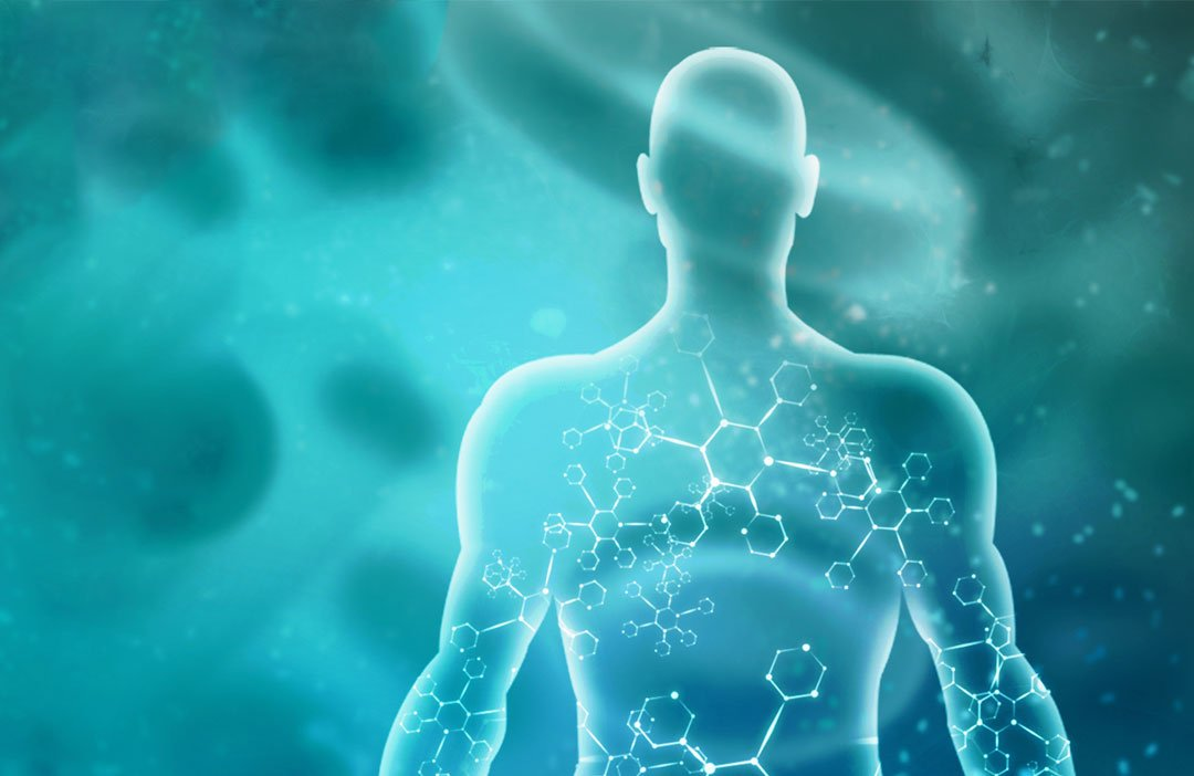 Understanding the Human Endocannabinoid System